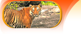 bharatpur tiger tour