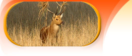 bandhavgarh kanha tour package